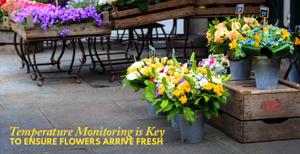 How Are Flowers Transported To Distributors Abco