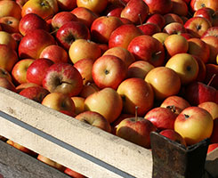 ABCO Apples